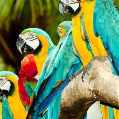 vogels_parrots.jpg